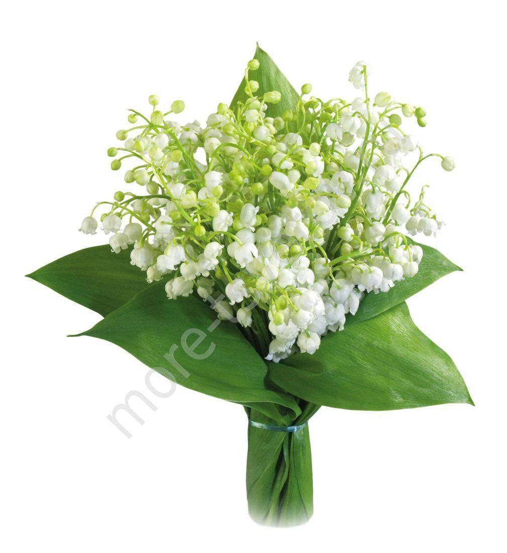 Купить цветы ландыши дешево весенние цветы на 8 марта картинки